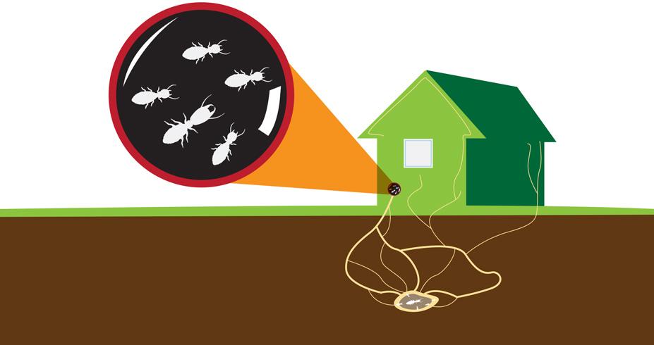 Termite Inspections | Tulsa Oklahoma
